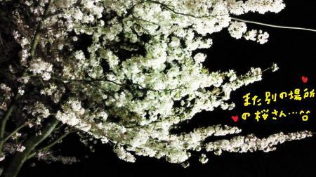 夜桜5#9829;