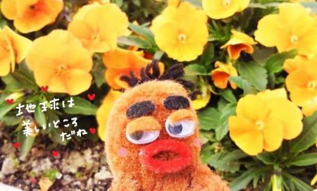 びすきぃもお花が大好き#9829;