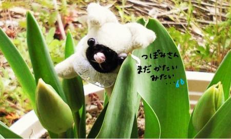 くるみちゃんとチューリップ2#9829;