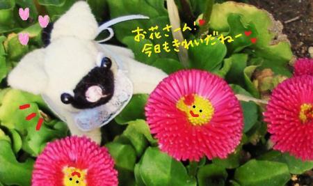 村のお花たち2#9829;