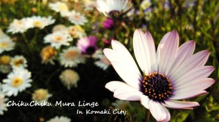 町のお花たち3#9829;