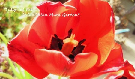 村のお花たち4#9829;
