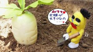 とらちゃんの収穫①#9829;