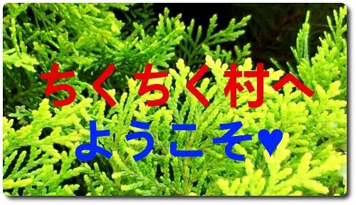 ガーデンの木★