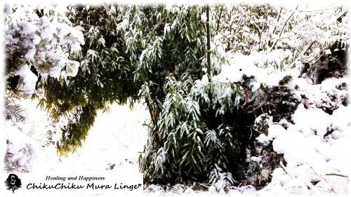 ちくちく村の雪☆