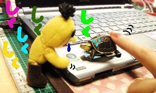 とら次郎とお遊び☆