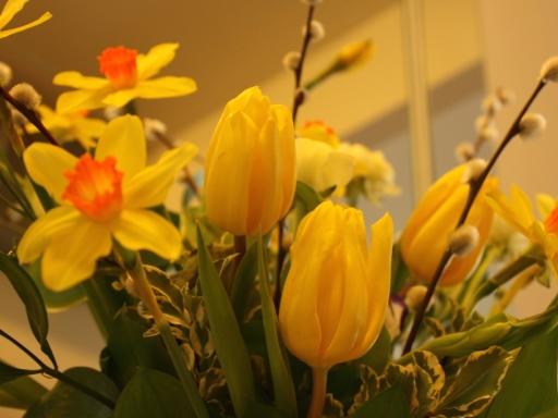 チューリップが咲いた♪