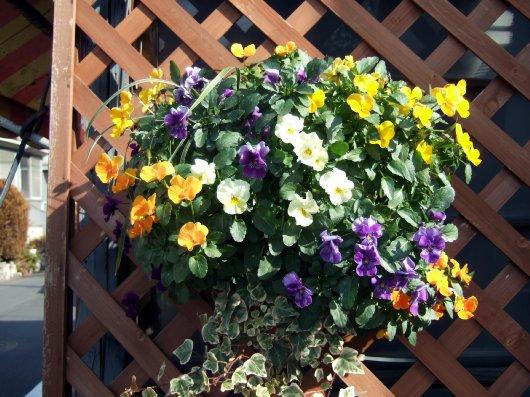 いつもお花が綺麗なお家