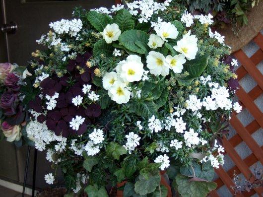 いつもお花が綺麗なお家 3