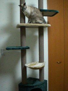 エピさん~新しいキャットタワー