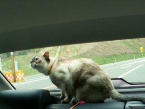 ドライブ~タヌさん