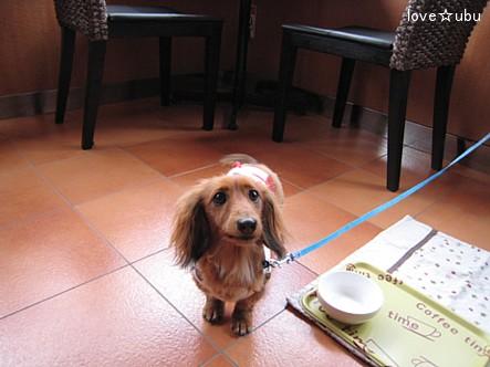 dogcafe①