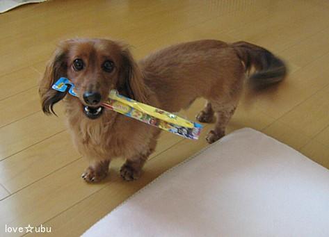 歯ブラシ③