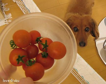 トマトとうぶ