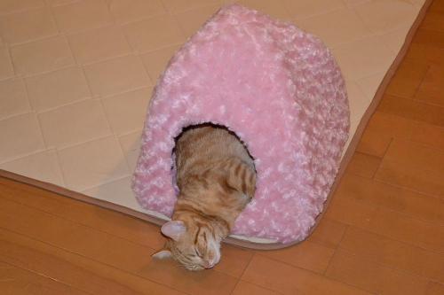 リンリン爆睡