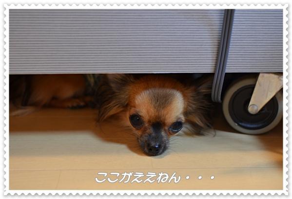 DSC_8016 ブログ