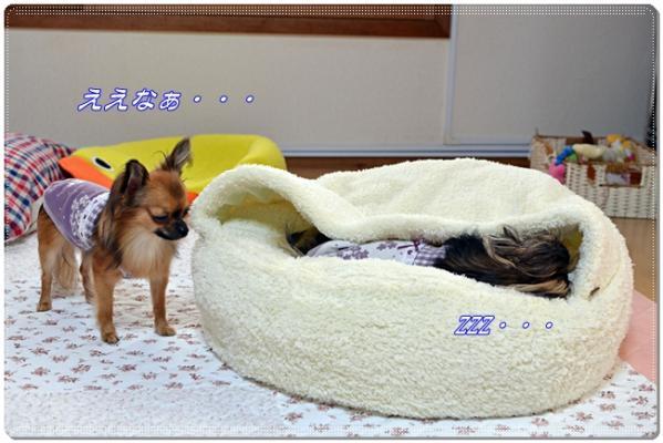 DSC_8331 ブログ