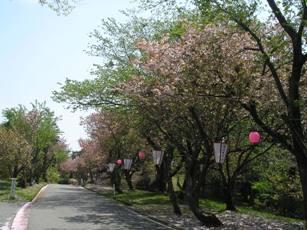 倶利伽羅県定公園1