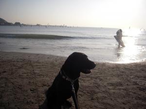 11月7日 海と犬
