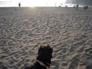 11月7日 砂浜と犬