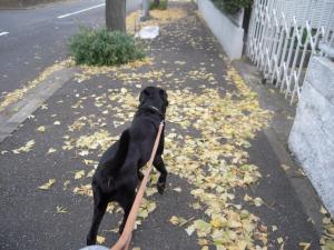 いざ散歩!