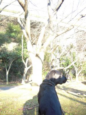 平日の散歩4
