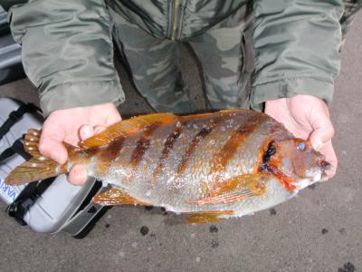 091122 この魚の名前は?convert_20091125085655