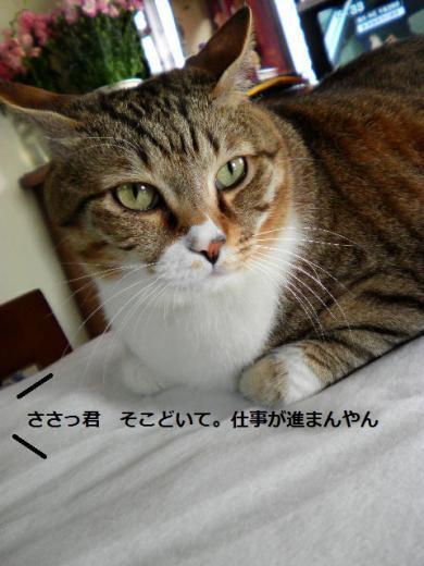 ささっちゃん部長