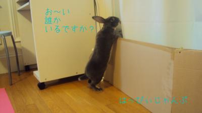 DSC06011_convert_20110205034739.jpg