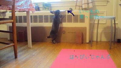 DSC06015_convert_20110205034757.jpg