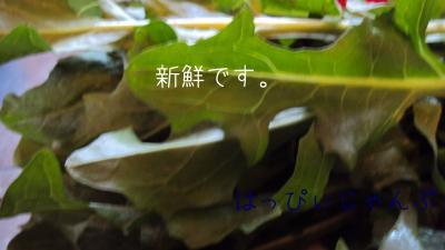DSC06385_convert_20110214215755.jpg