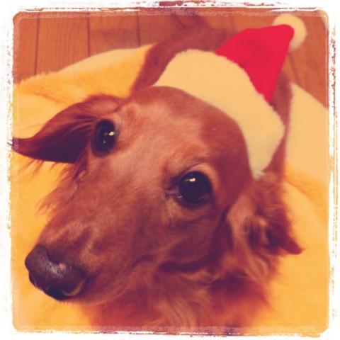アトムクリスマスinstagram①
