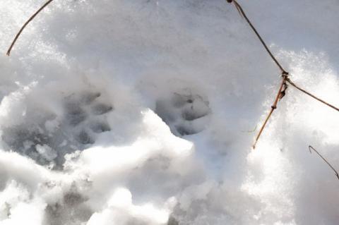 アトム雪遊び⑤