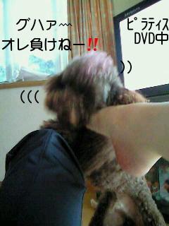 2010_0613_162600-NEC_0797.jpg
