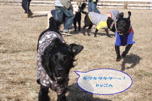20110109_020.jpg
