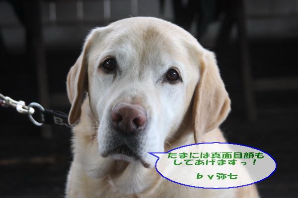 20110211_019.jpg