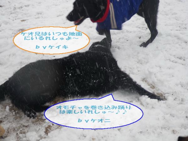 20110211_038.jpg