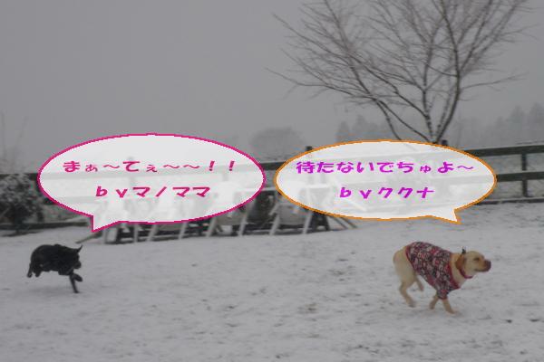 20110211_041.jpg