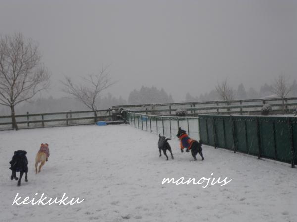 20110211_042.jpg