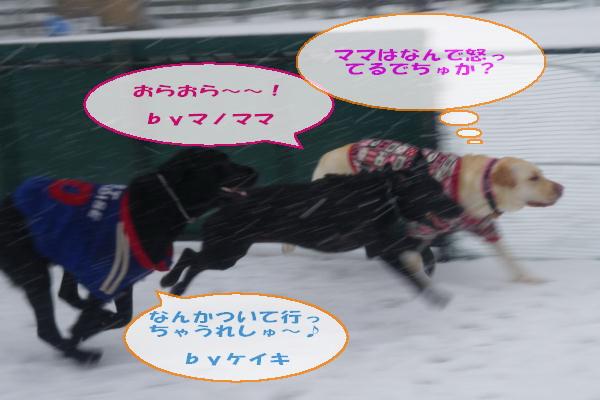 20110211_043.jpg