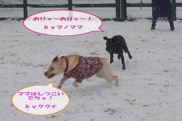 20110211_048.jpg