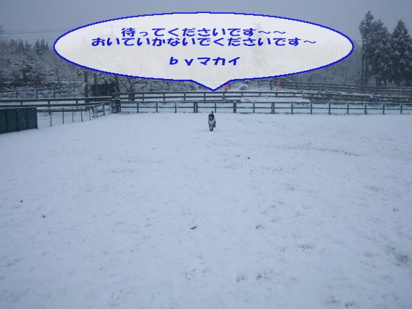 20110211_063.jpg