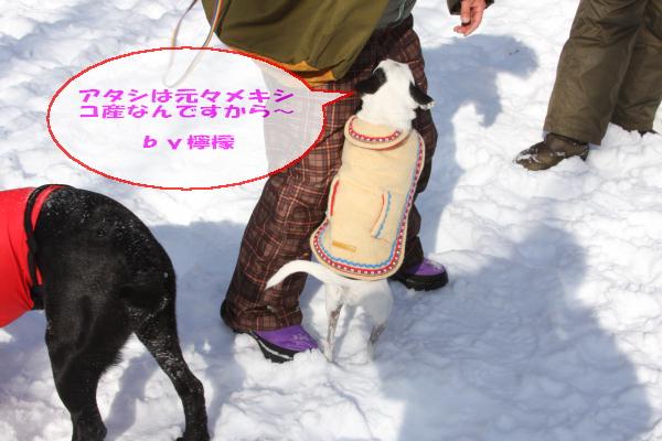 2011_02_06_0248.jpg