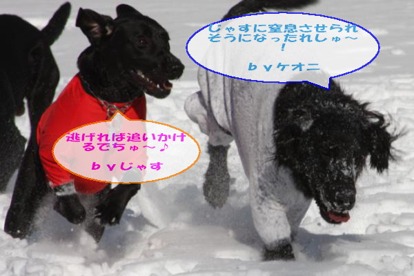 2011_02_06_0260.jpg