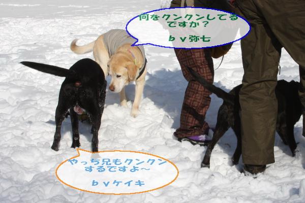 2011_02_06_0265.jpg
