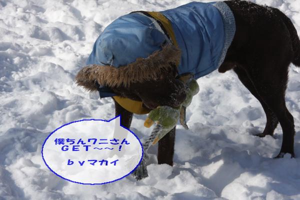 2011_02_06_0277.jpg