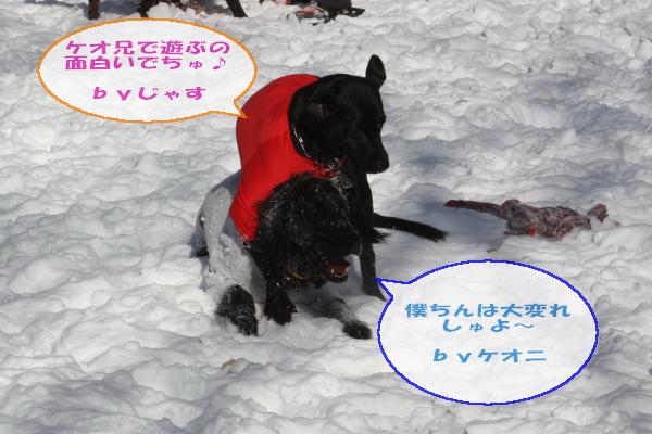 2011_02_06_0289.jpg