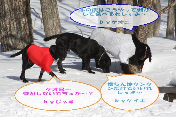2011_02_06_0294.jpg