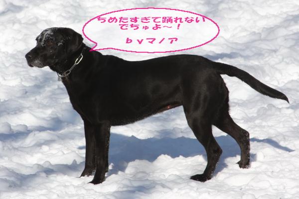 2011_02_06_0298.jpg