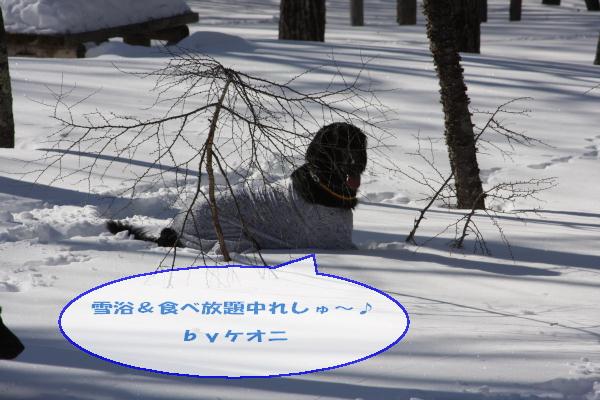 2011_02_06_0299.jpg